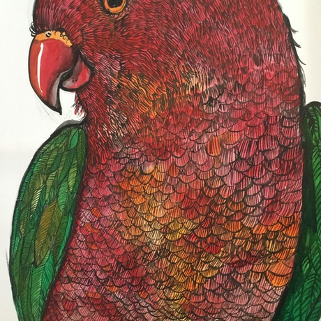 (CreativeWork) Bold King parrot by Karynne Ledger. Acrylic Paint. Shop online at Bluethumb.