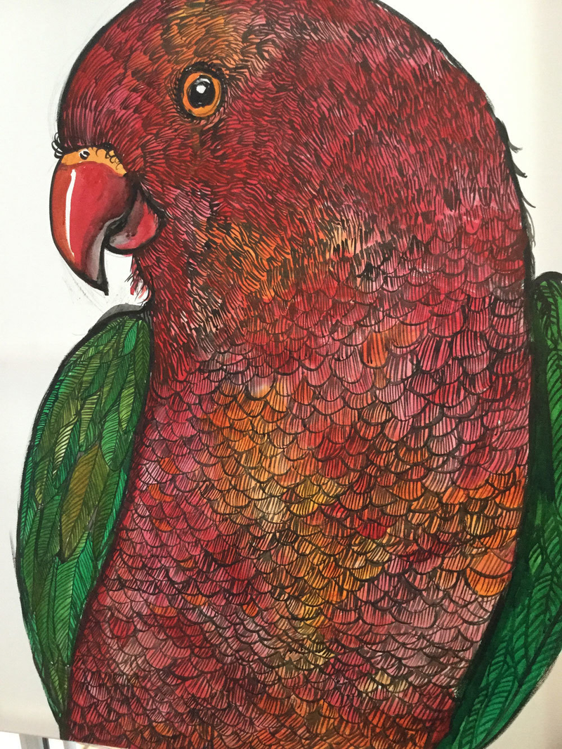(CreativeWork) Bold King parrot by Karynne Ledger. arcylic-painting. Shop online at Bluethumb.
