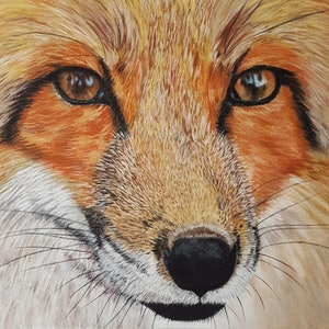 (CreativeWork) Red Fox 2 by Suzanne Perez. other-media. Shop online at Bluethumb.