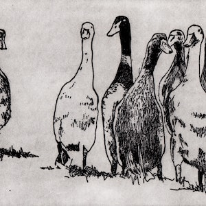 (CreativeWork) Ducks on the Run (Etching, Framed) Ed. 6 of 50 by Lydie Paton. print. Shop online at Bluethumb.