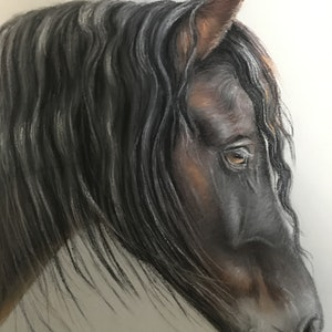 (CreativeWork) Friesan  horse by Marianne Bindemanis. #<Filter:0x00007fcb1a601d18>. Shop online at Bluethumb.