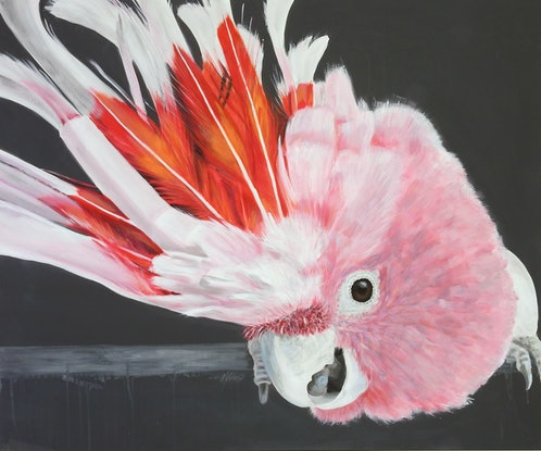 (CreativeWork) What! - Major Mitchell Cockatoo by Naomi Veitch. Acrylic Paint. Shop online at Bluethumb.
