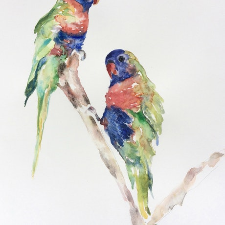 (CreativeWork) Rainbow lorikeets by Amanda Cutlack. Watercolour Paint. Shop online at Bluethumb.