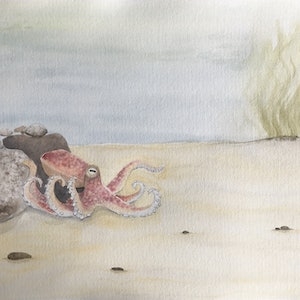 (CreativeWork) Octopus on sea floor by Kathryn Price. watercolour. Shop online at Bluethumb.
