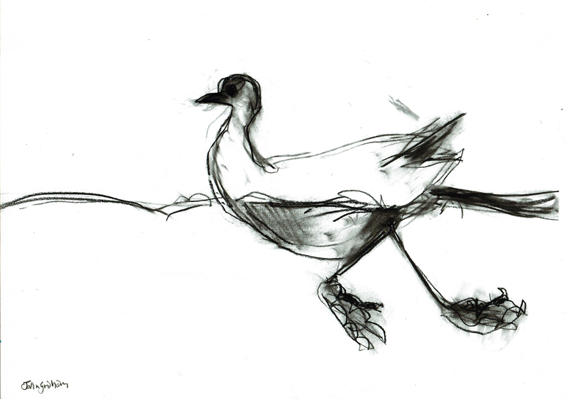 (CreativeWork) water Bird  by John Graham. drawing. Shop online at Bluethumb.