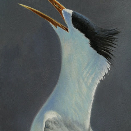 (CreativeWork) Crested Tern III by Brett Jarrett. Oil Paint. Shop online at Bluethumb.