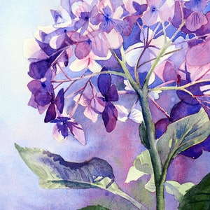 (CreativeWork) Hydrangea Intricacy by Chrysovalantou Mavroudis. watercolour. Shop online at Bluethumb.