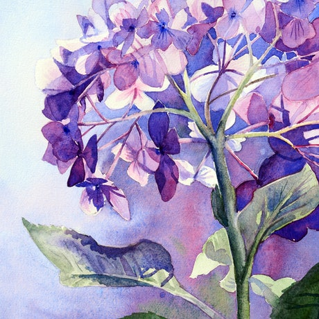 (CreativeWork) Hydrangea Intricacy by Chrysovalantou Mavroudis. Watercolour Paint. Shop online at Bluethumb.