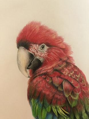 (CreativeWork) Macaw by Marianne Bindemanis. #<Filter:0x00007fcb1a2c2f80>. Shop online at Bluethumb.