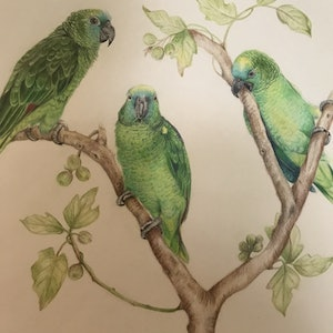 (CreativeWork) Amazon parrots by Marianne Bindemanis. #<Filter:0x00007fcb1a5b2bc8>. Shop online at Bluethumb.