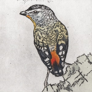 (CreativeWork) Spotted Pardalote II (Etching Edition) by Lydie Paton. mixed-media. Shop online at Bluethumb.