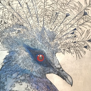 (CreativeWork) Crowned Pigeon (Etching) by Lydie Paton. mixed-media. Shop online at Bluethumb.