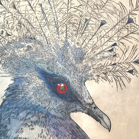 (CreativeWork) Crowned Pigeon (Etching) by Lydie Paton. Mixed Media. Shop online at Bluethumb.