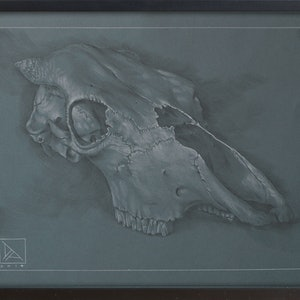 (CreativeWork) Skull study #1 by Daevid Anderson. drawing. Shop online at Bluethumb.