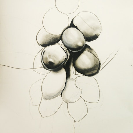 (CreativeWork) Summer Fruits by Yehoshua Viles. Drawings. Shop online at Bluethumb.