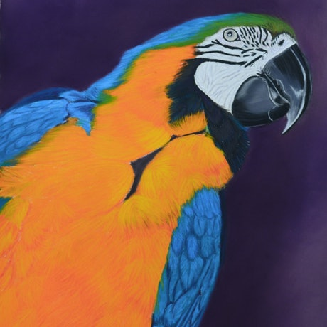(CreativeWork) Blue and Gold MaCaw by Kathleen Pieterse. Other Media. Shop online at Bluethumb.