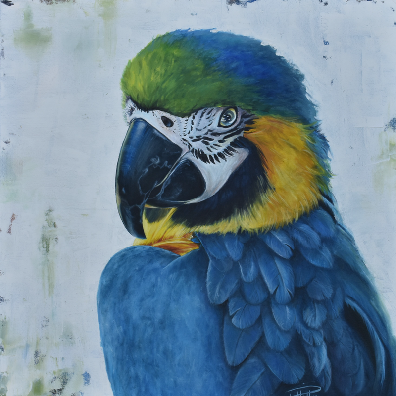 (CreativeWork) Macaw 2 by Rebecca Hill. oil-painting. Shop online at Bluethumb.