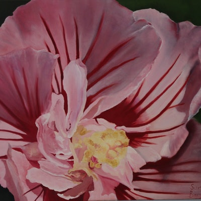 (CreativeWork) Pink Hibiscus - Flower's Series 1  by Sarah Bary. Oil Paint. Shop online at Bluethumb.
