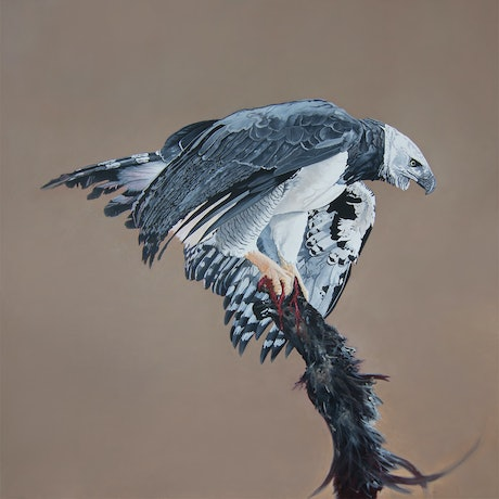 (CreativeWork) Graceful Power - Harpy Eagle by Dario Zanesco. Oil Paint. Shop online at Bluethumb.