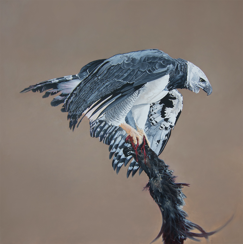 (CreativeWork) Graceful Power - Harpy Eagle by Dario Zanesco. oil-painting. Shop online at Bluethumb.