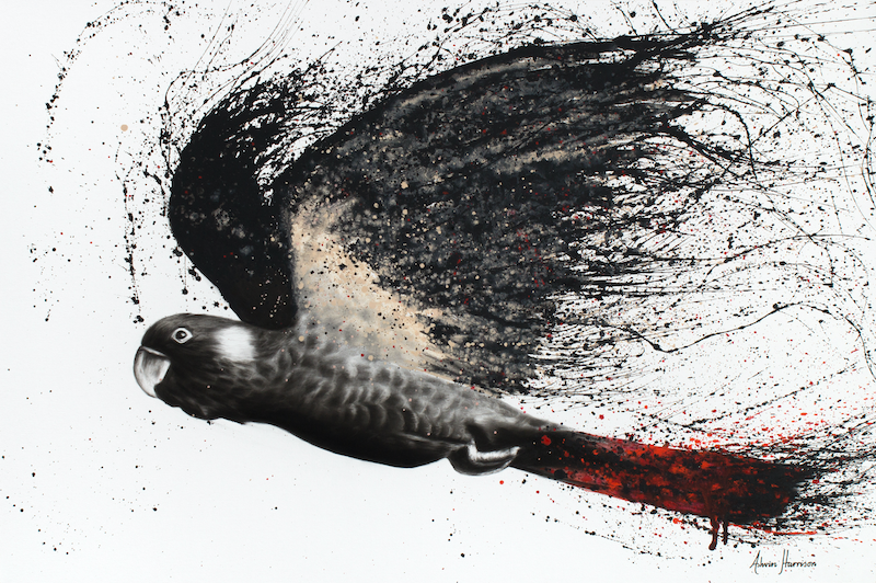 (CreativeWork) Fearless Black Cockatoo by Ashvin Harrison. arcylic-painting. Shop online at Bluethumb.