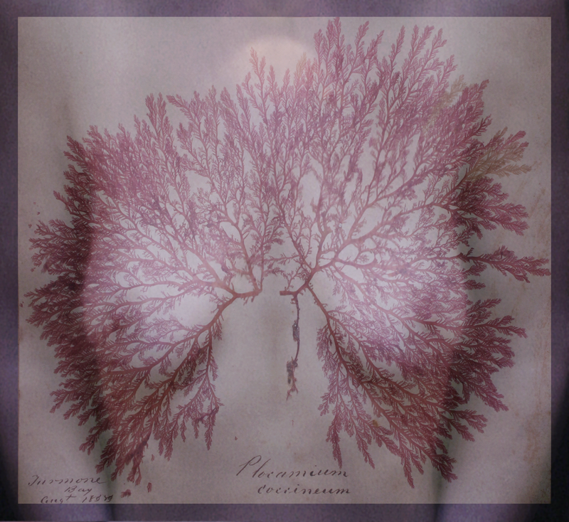 (CreativeWork) Bloodlines III by Jenny Pollak. photograph. Shop online at Bluethumb.