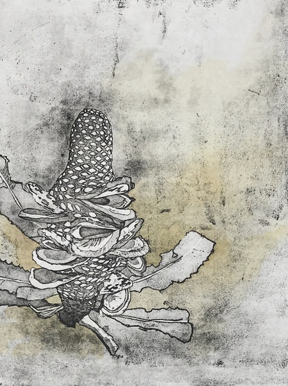 (CreativeWork) Banksia Cone (Etching, Unique State)  by Lydie Paton. mixed-media. Shop online at Bluethumb.