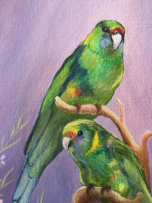 (CreativeWork) Two Mallee Ringnecks by Sally Mitchell. Oil Paint. Shop online at Bluethumb.