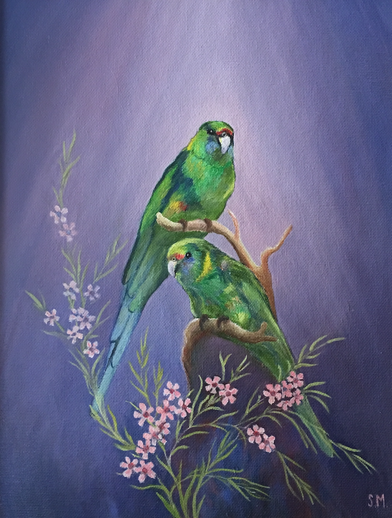 (CreativeWork) Two Mallee Ringnecks by Sally Mitchell. oil-painting. Shop online at Bluethumb.