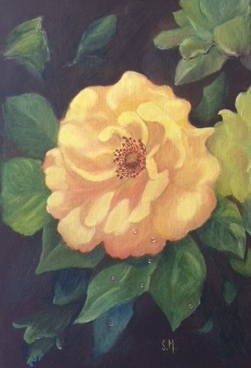 "(CreativeWork) Rose ""Ards Beauty"" by Sally Mitchell. oil-painting. Shop online at Bluethumb."