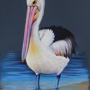 (CreativeWork) Pelican; 'Sexy and She know's it'  by Susan Cunningham Vibrant Expressions. other-media. Shop online at Bluethumb.