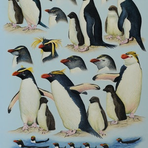 (CreativeWork) 'Crested Penguins' From the Complete Guide to Antarctic Wildlife by Brett Jarrett. oil-painting. Shop online at Bluethumb.