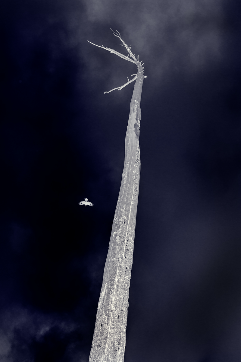 (CreativeWork) Equilibrium # 1. ed 1 of 20. by Peter Bratuskins. photograph. Shop online at Bluethumb.