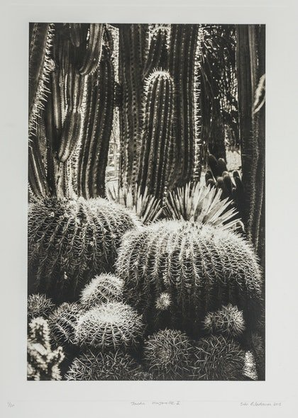 (CreativeWork) Jardin Majorelle 1 by silvi Glattauer. photograph. Shop online at Bluethumb.