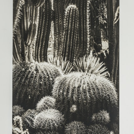 (CreativeWork) Jardin Majorelle 1 Ed. 3 of 20 by silvi Glattauer. Photograph. Shop online at Bluethumb.