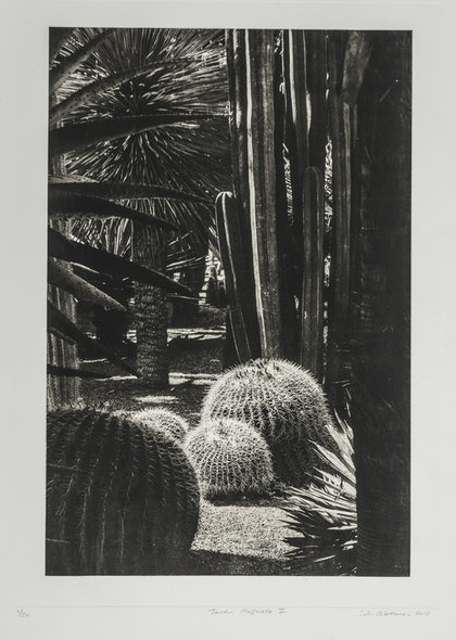 (CreativeWork) Jardin Majorelle 2 by silvi Glattauer. photograph. Shop online at Bluethumb.