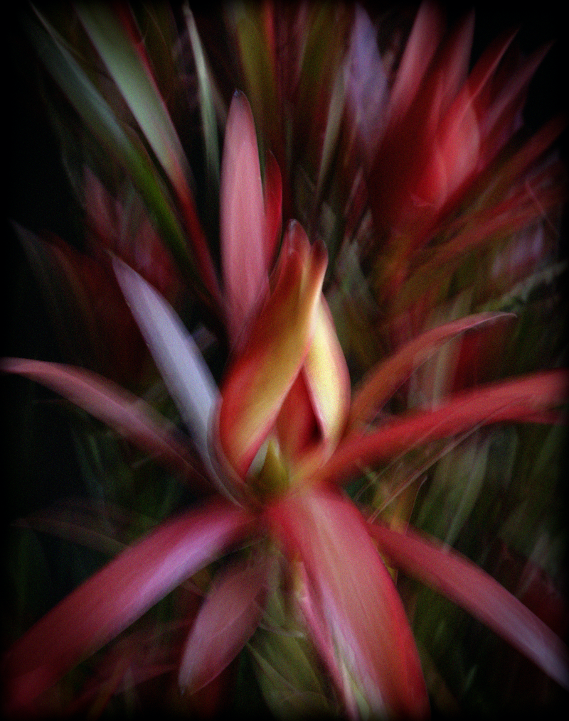 (CreativeWork) Fuego by silvi Glattauer. photograph. Shop online at Bluethumb.