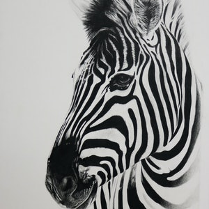 (CreativeWork) Zebra Portrait LIMITED EDITION DIGITAL PRINT Ed. 1 of 50 by Cherie Mongony. print. Shop online at Bluethumb.
