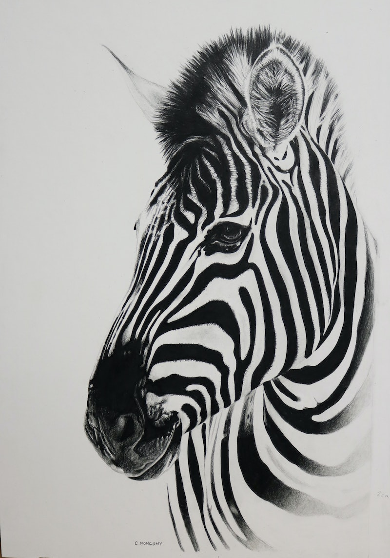 Creativework zebra portrait limited edition digital print ed 1 of 50 by cherie