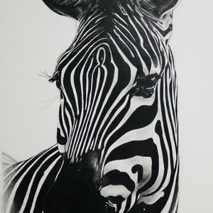 (CreativeWork) Zebra Portrait 2 LIMITED EDITION DIGITAL PRINT Ed. 1 of 50 by Cherie Mongony. print. Shop online at Bluethumb.