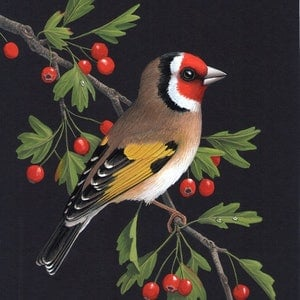 (CreativeWork) Goldfinch by Lyn Cooke. watercolour. Shop online at Bluethumb.