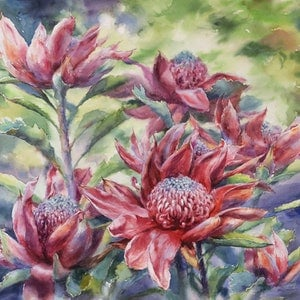 (CreativeWork) Waratah by Richard(Tiejun) Chao. watercolour. Shop online at Bluethumb.