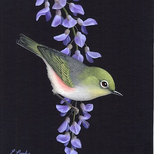 (CreativeWork) Silvereye by Lyn Cooke. watercolour. Shop online at Bluethumb.