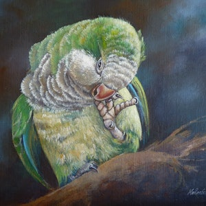 (CreativeWork) Superb Parrot by Marion Schumacher. arcylic-painting. Shop online at Bluethumb.