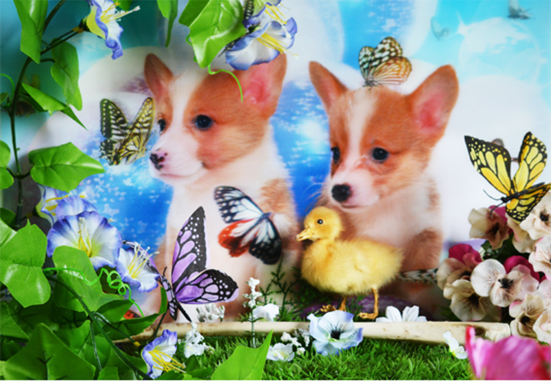 (CreativeWork) The thin veneer - Puppies by Ray Cook. photograph. Shop online at Bluethumb.