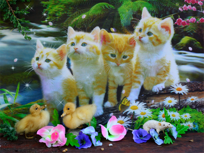 (CreativeWork) The thin veneer - Kittens 2015 by Ray Cook. photograph. Shop online at Bluethumb.