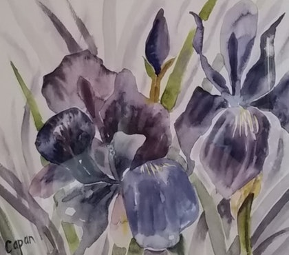 (CreativeWork) Purple Iris by Susan Capan. watercolour. Shop online at Bluethumb.