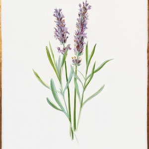 (CreativeWork) Posh Botanicals No.2 by Donna Christie. oil-painting. Shop online at Bluethumb.