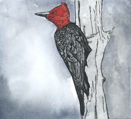 (CreativeWork) Magellanic woodpecker by Lydie Paton. Mixed Media. Shop online at Bluethumb.