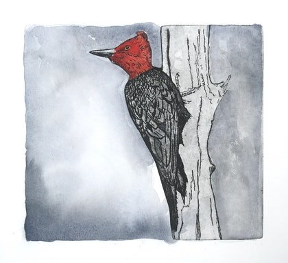(CreativeWork) Magellanic woodpecker by Lydie Paton. mixed-media. Shop online at Bluethumb.